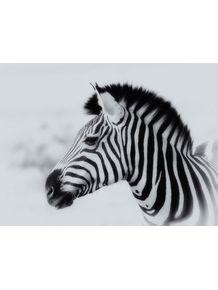 quadro-africa-series-01