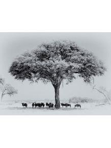 quadro-africa-series-02