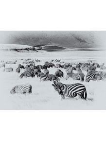 quadro-africa-series-03