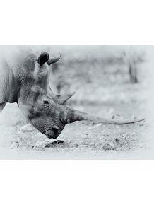 quadro-africa-series-12