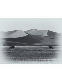 quadro-africa-series-19