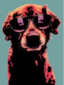 quadro-dog-pop