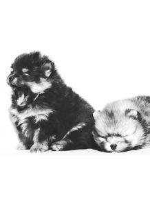 quadro-baby-dogs-1