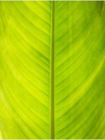quadro-folha-de-heliconia