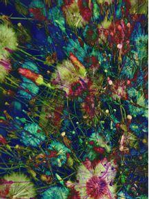 quadro-dandeliondec