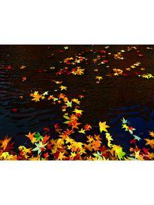 quadro-cores-da-natureza