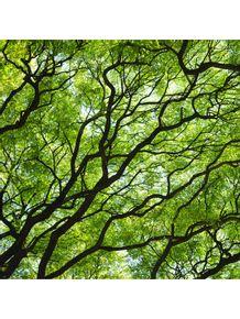quadro-verdes-veias