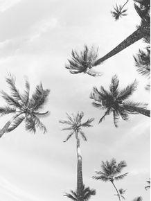 quadro-coqueiro-02