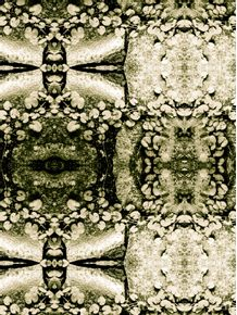 quadro-fossilized-path