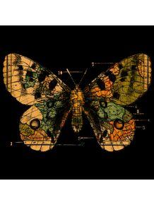 quadro-time-flies