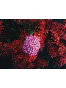 quadro-mar-de-flor