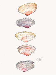 quadro-sea-shells