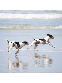 quadro-sea-dogs