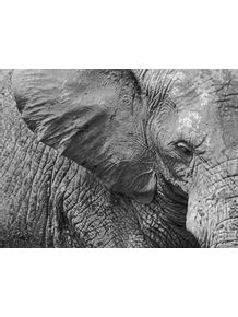 quadro-animal--o-elefante-e-suas-texturas--p