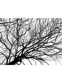 quadro-rizomatico