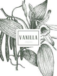 quadro-botanical--vanilla