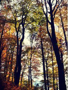 quadro-floresta-do-outono