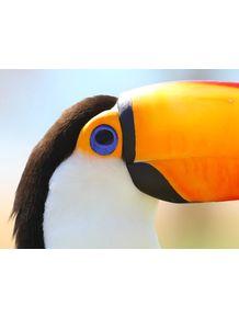 quadro-olhar-do-tucano