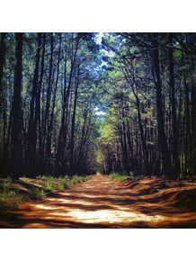 quadro-caminho-pela-floresta