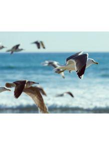 quadro-retro-seagulls