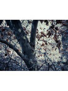 quadro-folhas-secas-01