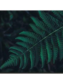 quadro-verde-folha-verde