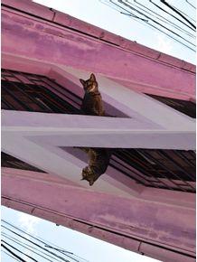 quadro-gatos-chilenos