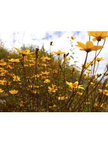 quadro-campo-florido
