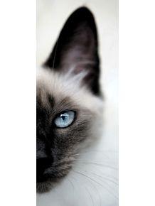 quadro-suri-cat
