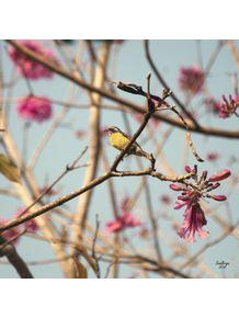 quadro-passarinho-cambacica