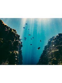 quadro-aquafish