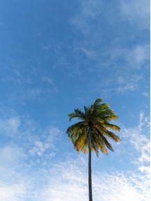 quadro-a-palmeira