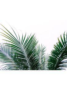 quadro-palma-verde