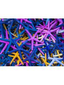quadro-estrelas-do-mar