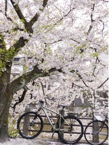 quadro-cerejeiras-no-japao