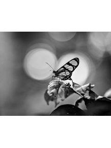 quadro-borboleta-em-pb