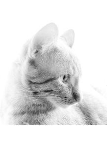 quadro-anjo-gato