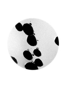 quadro-invisivel-celula-microscopica