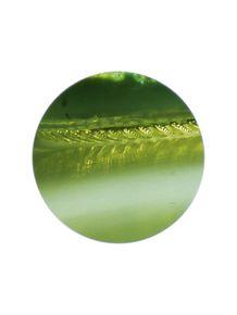 quadro-invisivel-folha-microscopica