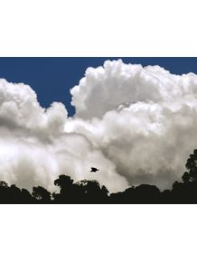 quadro-trees-bird-clouds-and-blue