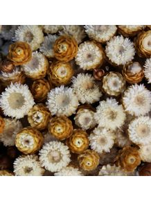 quadro-flores-50
