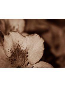 quadro-flor-pb