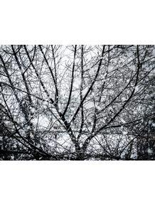 quadro-neve-caindo