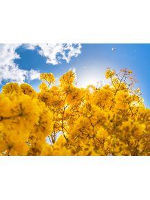 quadro-ipe-amarelo-1