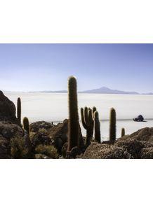 quadro-ilha-de-cactos