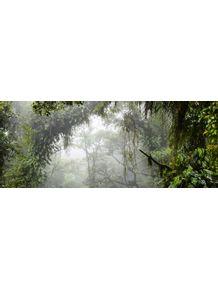 quadro-rainforest