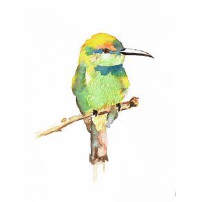 quadro-passaro-aquarela