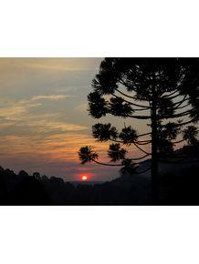 quadro-araucaria-angustifolia