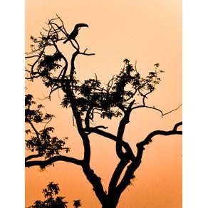 quadro-toucan-silhouette-at-sunset