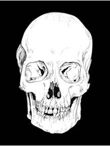 quadro-head-bone